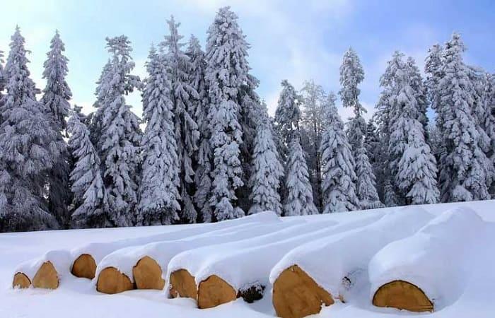 Строительство домов и бань из зимнего леса